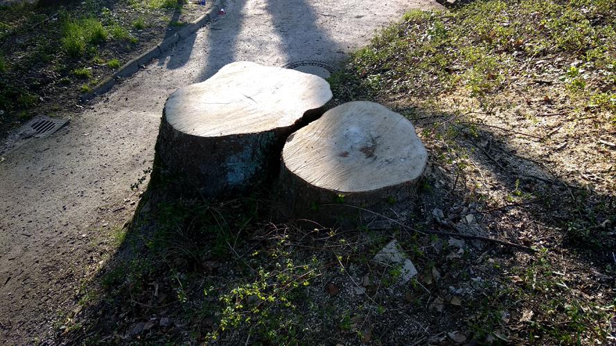 Doppelter Baumstumpf